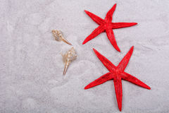 Red starfishes and two shells on a sand background Royalty Free Stock Image