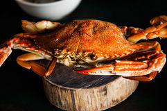 Red steamed blue crab Royalty Free Stock Image