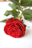 Red steg Royaltyfria Bilder