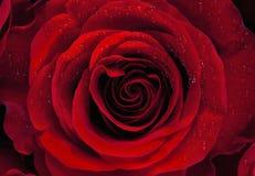 red steg Royaltyfri Bild