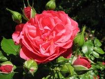 red steg Royaltyfria Foton