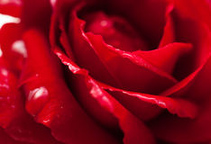 red steg arkivfoto