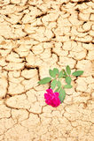 Red steg på sprucken jordning Royaltyfria Bilder