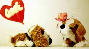 red steg Två lilla flotta hundkapplöpning i rollen av vänner royaltyfria foton