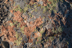 Red stone, covered with lichen Royalty Free Stock Photos
