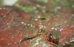 Red stone Royalty Free Stock Photos