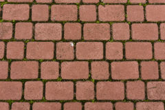 Red stone paving Stock Photography