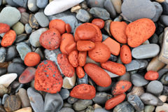 Red stones on a pebble beach background Royalty Free Stock Image