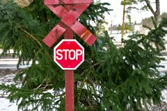Red stop traffiic sign end of the road in front of the green forest tree in winter royalty free stock photography