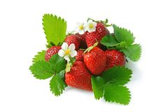 Red strawberries. Blossom and green leaves isolated on a white background Stock Images