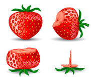 Red strawberries. Illustration of fresh red strawberries with green leafs Royalty Free Stock Photography