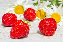 Red strawberries on a background of white daisies, close-up Royalty Free Stock Photography