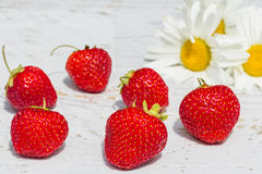 Red strawberries on a background with white daisies, close-up Stock Photos