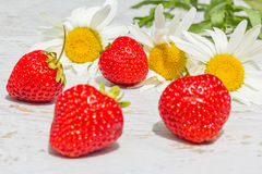Red strawberries on a background with white daisies, macro Stock Photos