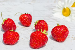 Red strawberries on a background of white daisies Royalty Free Stock Images