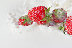 Red strawberries falling into the milk with splash Royalty Free Stock Photo