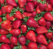 Red strawberries. Stock Photography