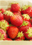Red strawberries. With green branches, picture up close Royalty Free Stock Images