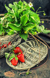 Red strawberries with green leaves ans spring flowers. Vintage s Stock Photo