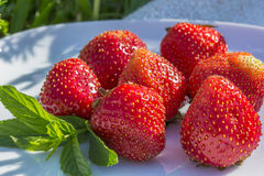 Red strawberries and green sprig of mint Royalty Free Stock Photo
