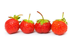Red strawberries isolated. On the  white background Stock Images