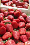Red strawberries pattern in maket box Royalty Free Stock Image