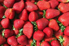 Red strawberries pattern in maket box Stock Image