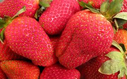 Red Strawberries Ready to Eat Royalty Free Stock Image