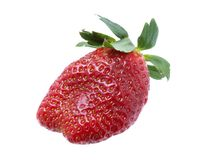 Strawberries on white one Royalty Free Stock Images