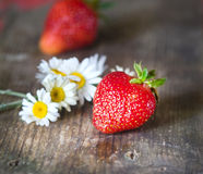 Red strawberries and wild daisies Royalty Free Stock Photo
