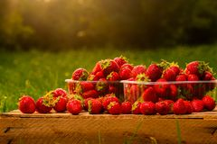 Red strawberries on a wooden table. In boxes stock photo