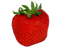 A red Strawberry. Isolated Royalty Free Stock Photography