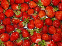 Red strawberry background Royalty Free Stock Photos
