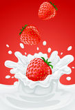 Red strawberry fruits falling into the milk Stock Image