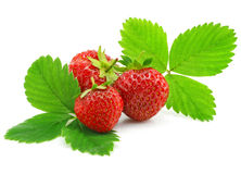 Red strawberry fruits with green leafs isolated Royalty Free Stock Photos
