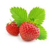 Red strawberry fruits with green leafs isolated Royalty Free Stock Photography