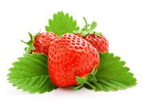 Red strawberry fruits with green leaves Royalty Free Stock Photos