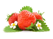 Red strawberry fruits with green leaves Stock Photography