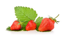 Red strawberry fruits with green leaves Royalty Free Stock Image