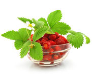 Red strawberry fruits with leafs isolated Royalty Free Stock Images