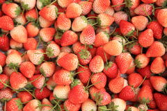 Red strawberry fruits Royalty Free Stock Photos