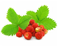 Free Red Strawberry Fruits With Green Leafs Royalty Free Stock Images - 5467169