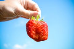 Red strawberry in the hand Stock Image