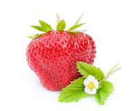 Red strawberry isolated on white background Stock Photography