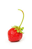 Red strawberry isolated on the white background Stock Photos