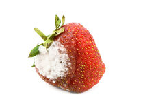Red strawberry with a patch of mold Stock Photography