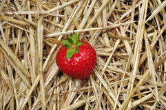 Red strawberry on a straw background Royalty Free Stock Photo