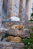 Red stray cat adult on a wall between the medieval streets of th Royalty Free Stock Photo