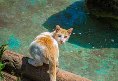 Red street cat drinks water from the fountain. In Morocco. Homeless cat looking at the camera Royalty Free Stock Photos