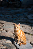 Red street cat Royalty Free Stock Photos